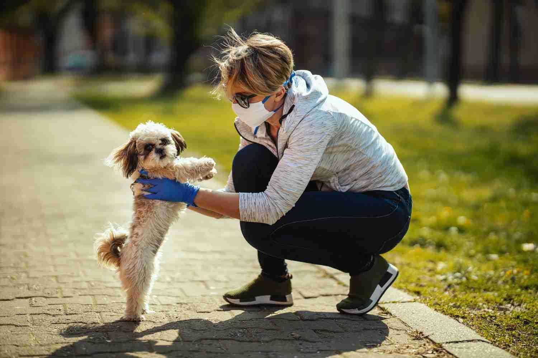 Prendersi cura del proprio amico a quattro zampe cane passeggiata