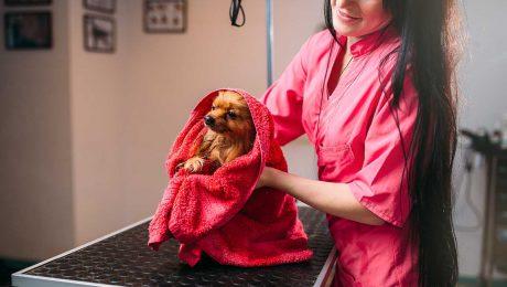 Lavaggio del cane a secco e lavaggio del cane con acqua